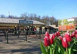Day tour to Keukenhof