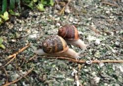 Balchik - snail farm in Bulgarevo - Kaliakra Cape